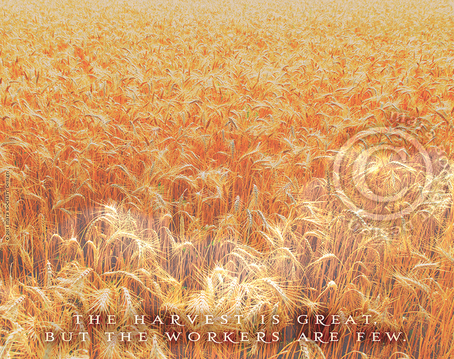 The Harvest - triptych - premium canvases