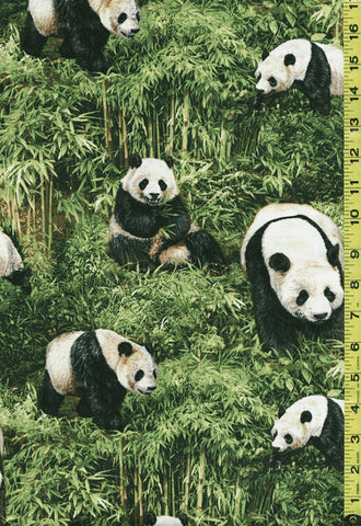 Asian -  Pandas & Bamboo Forest - 112-31951