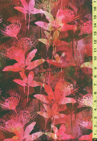 *Asian - In the Beginning - Australian Beauties - Kangaroo Paw Floral - 3AUB-2 -Hot Pink, Orange, Green