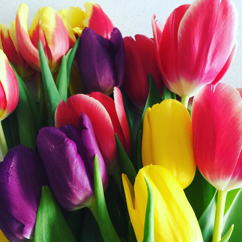 Colourful Floral Tulip Inspiration, friday motivation, weekend inspiration - stil haven