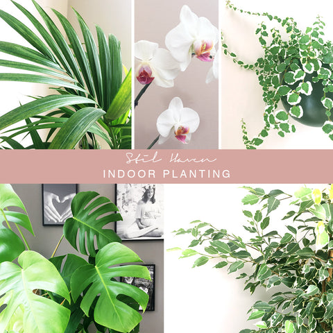 Stil Haven indoor planting interior inspiration greenery