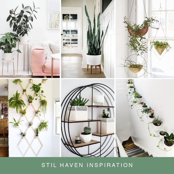 stil haven indoor plant inspiration