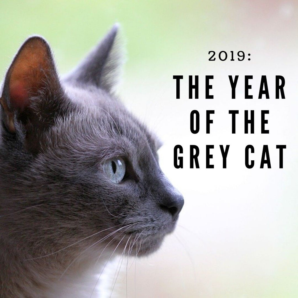 2019: The Year of the Grey Cat