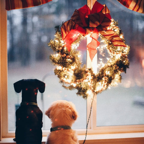 two dogs looking out a window during the Christmas