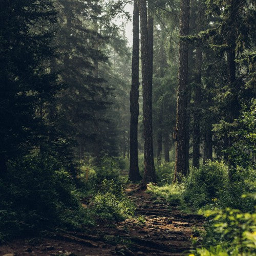 forest bathing and its benefits