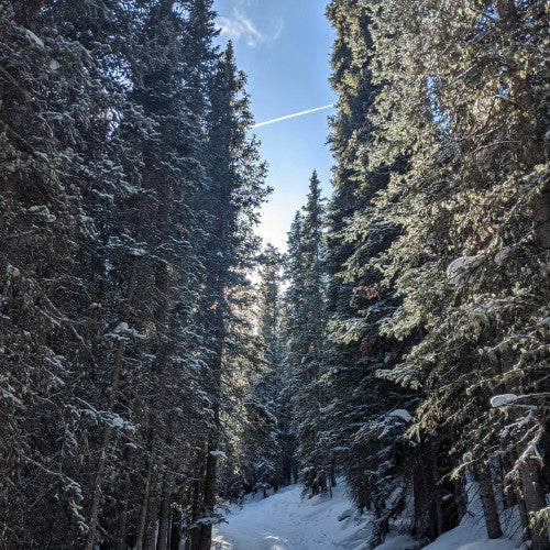 Icicle Toes and Snowflakes: A First Attempt at Snowshoeing