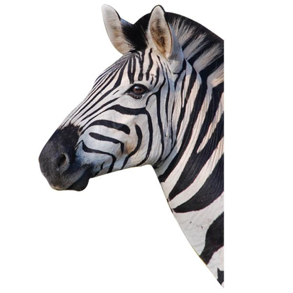 VWAQ Zebra Head Peel and Stick Wall art Decal - VWAQ Vinyl Wall Art Quotes and Prints no background