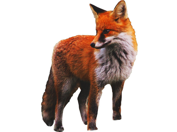 VWAQ Giant Fox Wall Decal Sticker, Large Red Fox Wall Art Decor Wild Animal Clings - PAS12 - VWAQ Vinyl Wall Art Quotes and Prints
