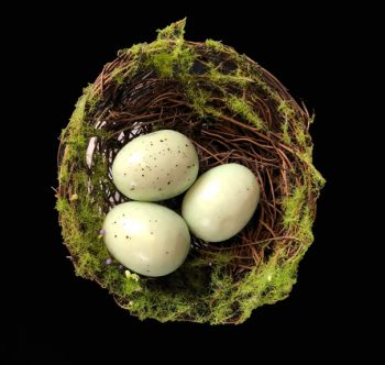 Small Moss Bird's Nest