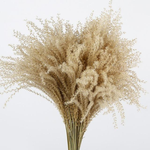 Dried Pampas Grass-10 Stem Bundle