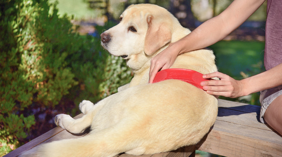 How to turn your dog's grooming into a massage