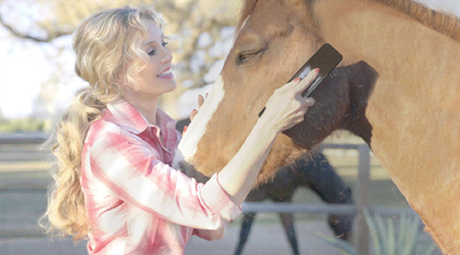 Grooming to improve your horse's trust