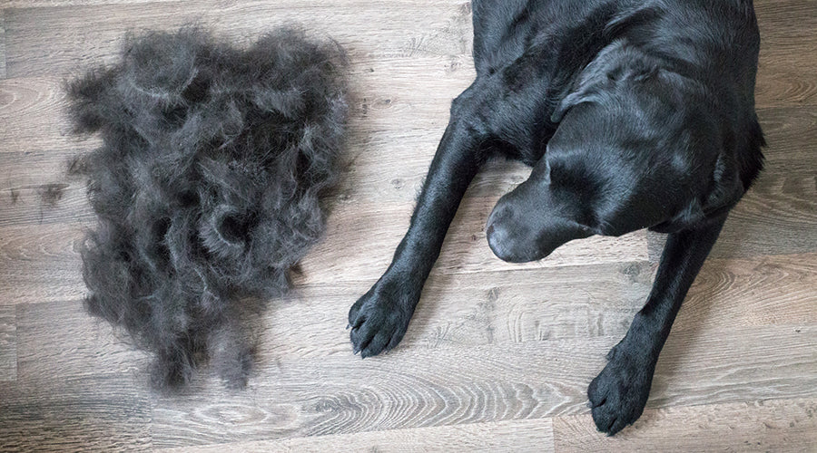 Helping your animal shed – naturally - StripHair