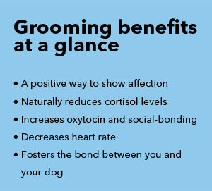 How mindful grooming can reduce stress and build confidence in dogs