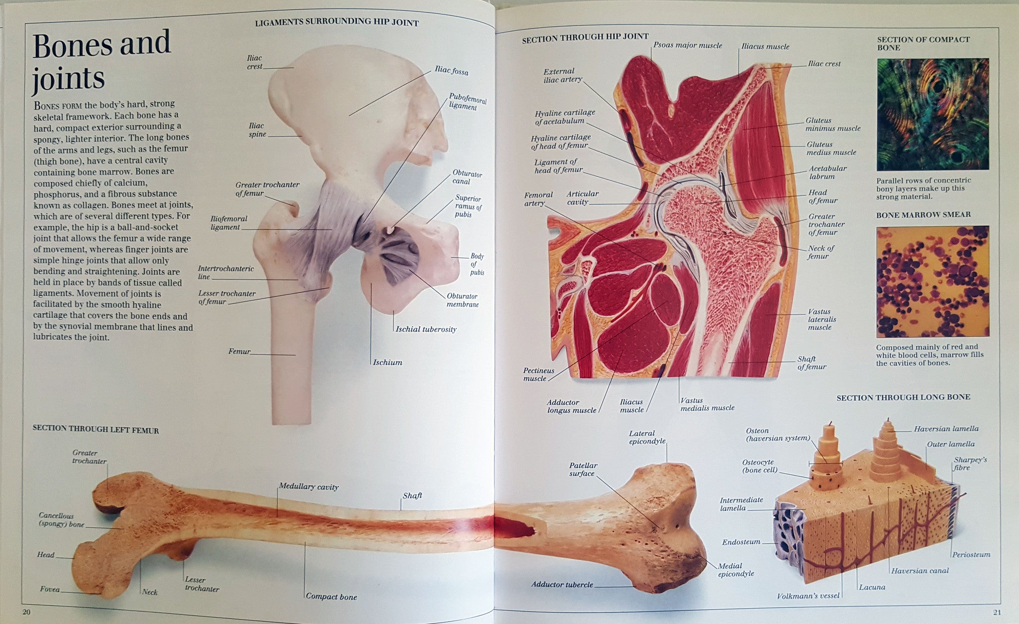 The Visual Dictionary of the Human Body – Thrifty Teachers