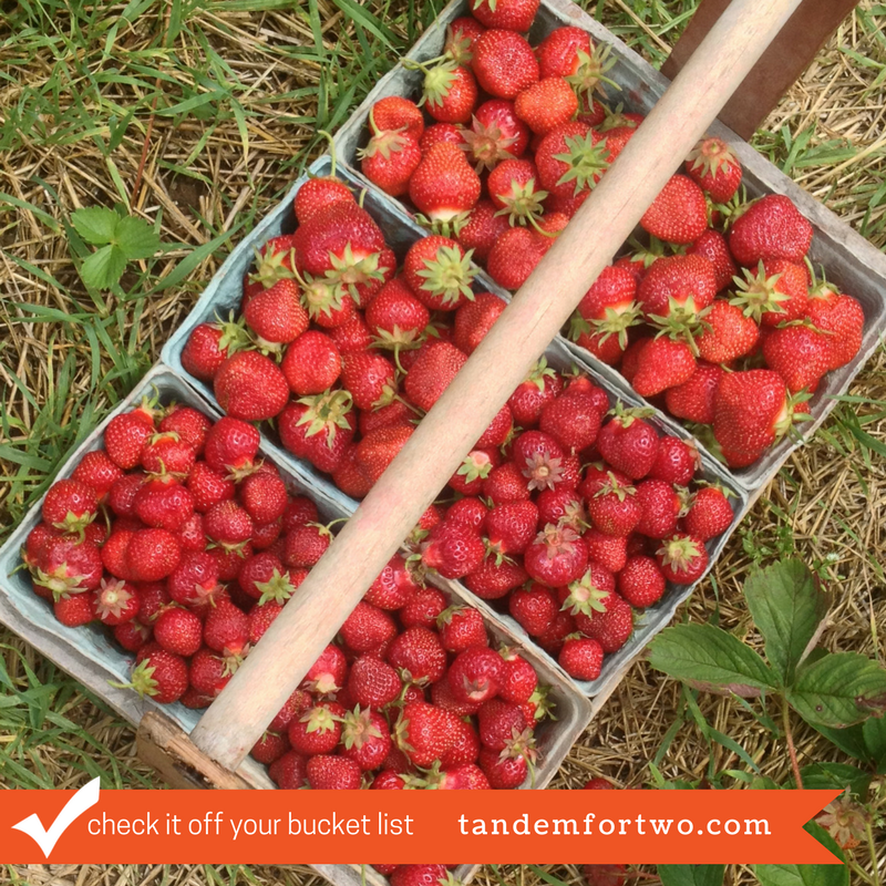 Check It Off Your Bucket List: Go Strawberry Picking
