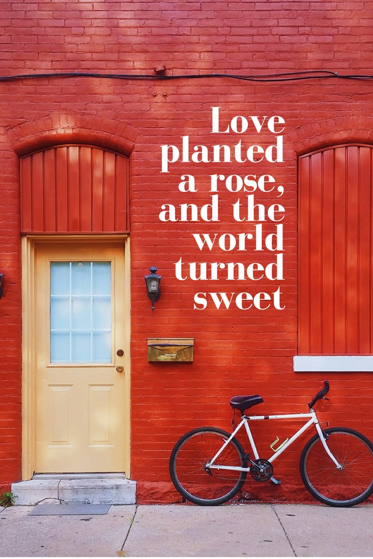Love Planted a Rose - Tandem For Two