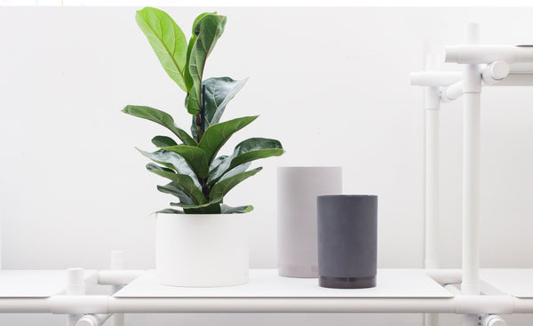 Cylindrical planter and vases