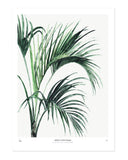 Botanics / Howea