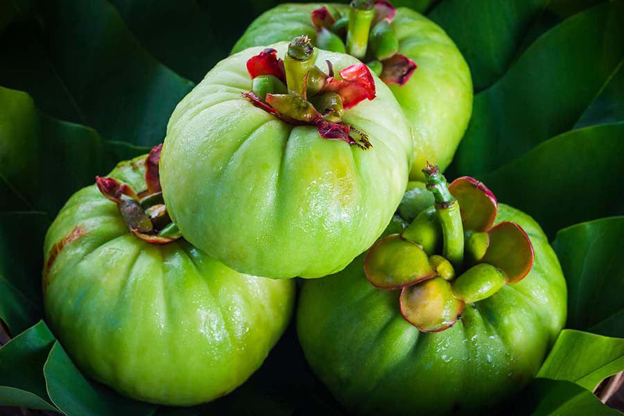 Research on Garcinia Cambogia for Weight Loss