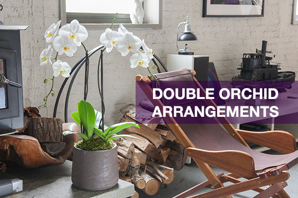 double orchid arrangements