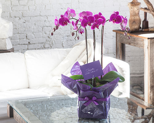 orchid wrapping