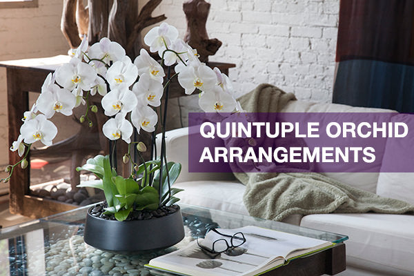 quintuple orchid arrangements