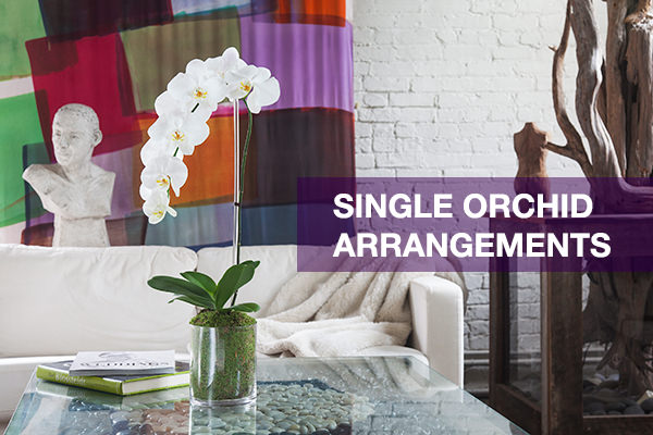 single orchid arrangements