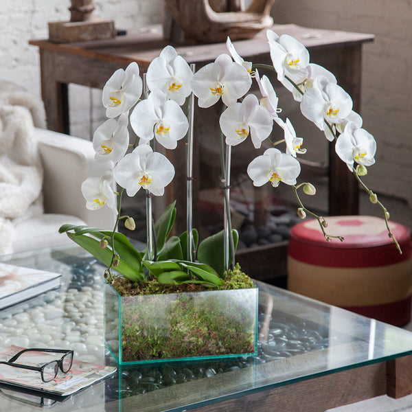 Orchid Arrangement Chrystal Clear With White Orchids