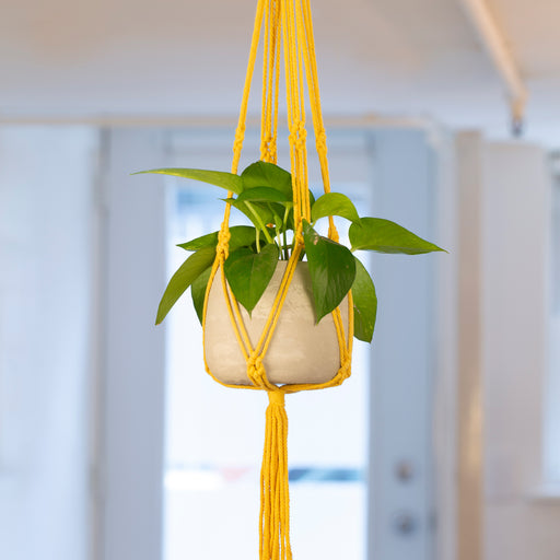 Yellow Macrame + Cement Planter