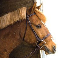 Exselle Elite Fancy Square Raised Bridle Oversize Havana