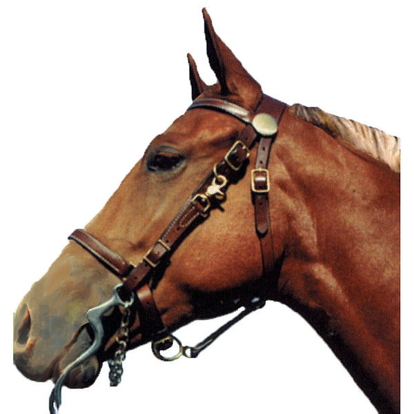 Shenandoah Leather Halter Bridle Combo Horse - Sterling Steed Enterprises - 1