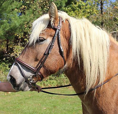Draft Horse Brown and Sage Green Padded English Leather Bridle - Sterling Steed Enterprises - 1