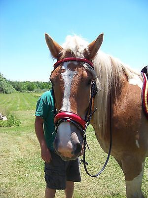 Draft Horse Black and Red  Leather English Bridle - Sterling Steed Enterprises - 1