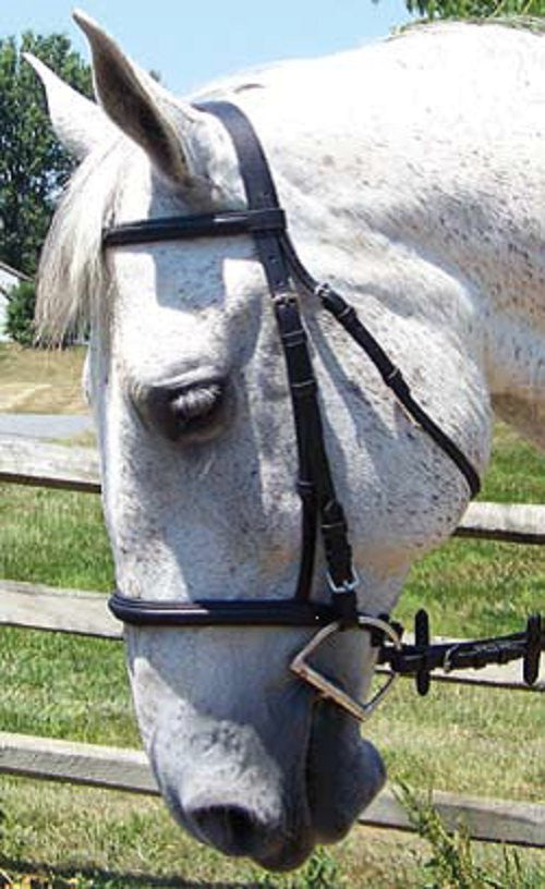 Thornhill Pro-Trainer Raised, Self Padded, Snaffle Bridle - Sterling Steed Enterprises