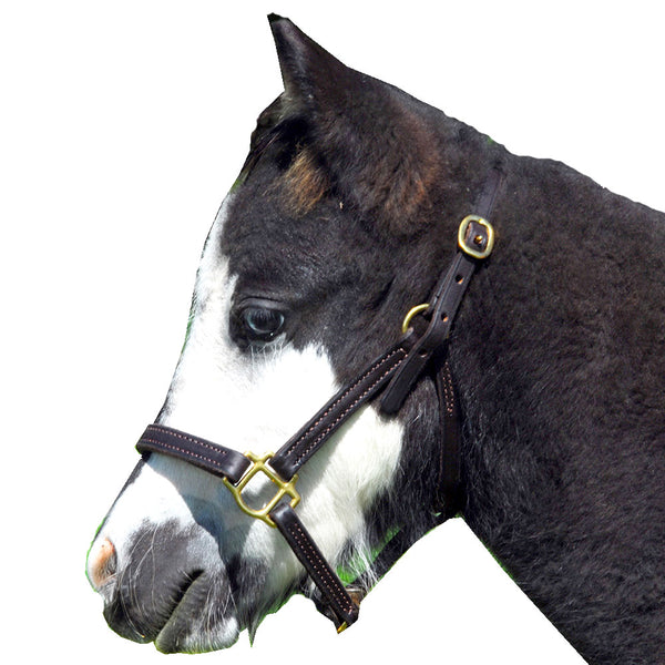 Halter- Miniature Horse Leather Halter Class A