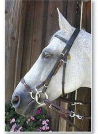 Kineton Noseband-Horse - Sterling Steed Enterprises
