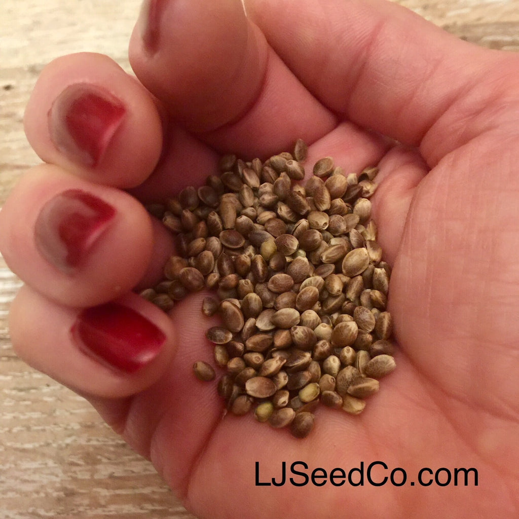 Hemp Seeds the BEST Plant Based Protein