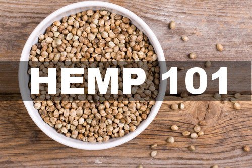 Hemp 101 - bowl of hemp seeds on wooden table