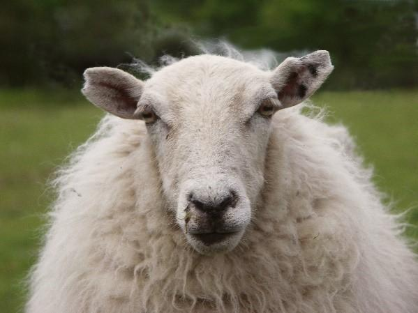 Don't be a sheep that falls for fear-based medicine