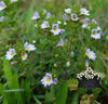 EyeBright 1/2oz