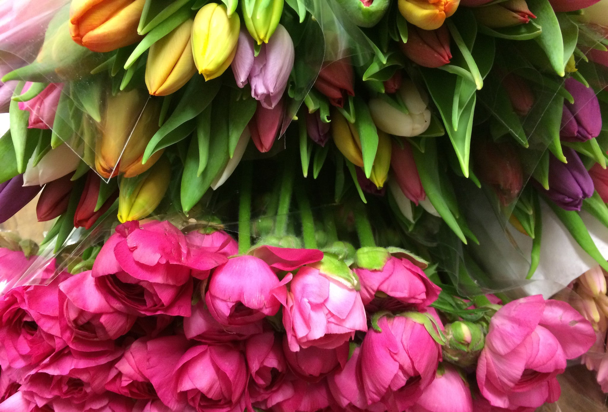 Bright and bold spring flowers including tulips and ranunculus.