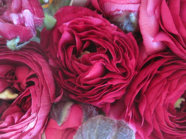 Gorgeous pink flowers in stock now.