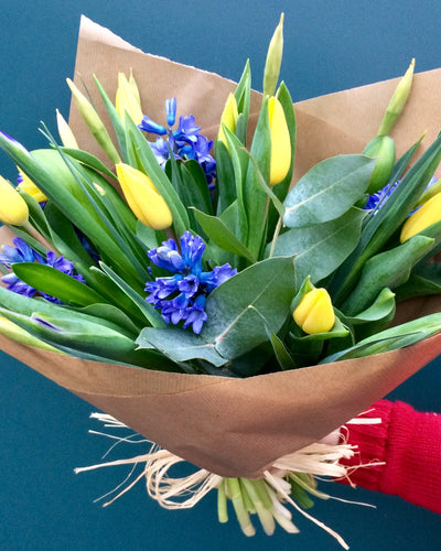 Yellow and blue Spring flower mix with Tulips and Hyacinths