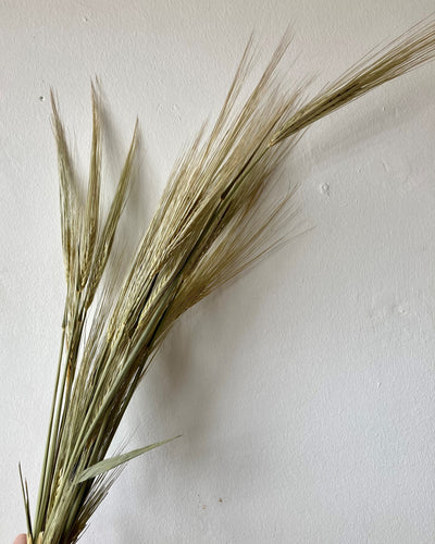 Dried Barley Bunches