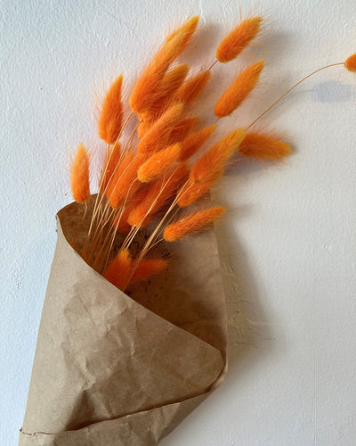Dried Orange Bunny's Tails