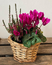 Purple planted basket