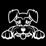 Schnauzer Peeking V1 Single Color Transfer Type Decal