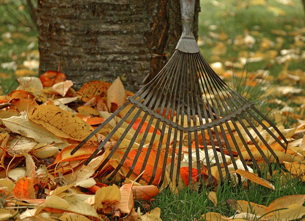 10 Ways To Avoid Painful Raking Injuries