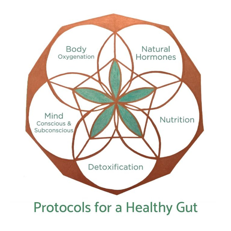 Gut Protocol (Physical Version)